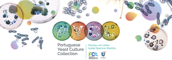 Portuguese Yeast Culture Collection