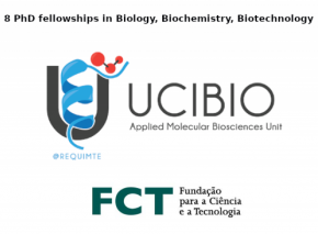 8 phd fellowships porto