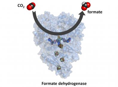 formate dehydrogenases